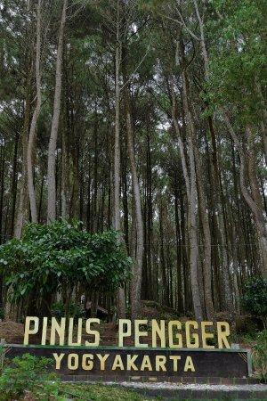 Pinus Pengger Nature Tourism