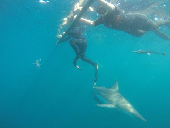 Blue Wilderness Shark Adventures: Sin Jaula