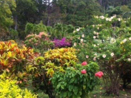 Dominica Botanic Gardens: photo0.jpg