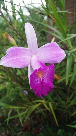 Lajeado, RS: Flores