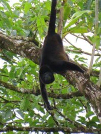 Canoa Aventura: Monkey