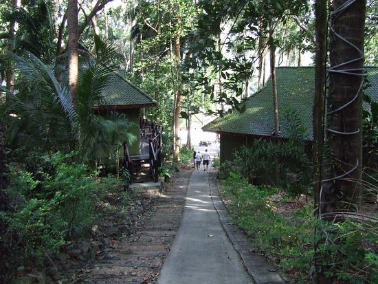 Nirvana Resort Koh Chang : Bungalows dans la verdure