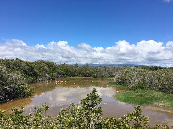 Puerto Villamil, Ecuador: Flamingos