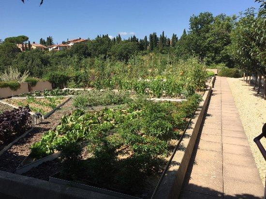 Hotel Terre di Casole: Orto botanico sul terrazzo