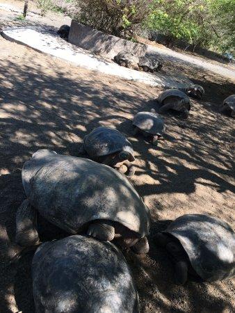 Puerto Villamil, Ecuador: Tortoises