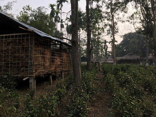 Nature Hunt Eco Camp, Kaziranga: photo6.jpg