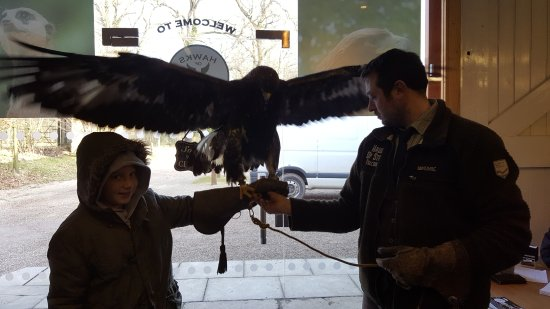 Newark-on-Trent, UK: my son with the golden eagle Rambo