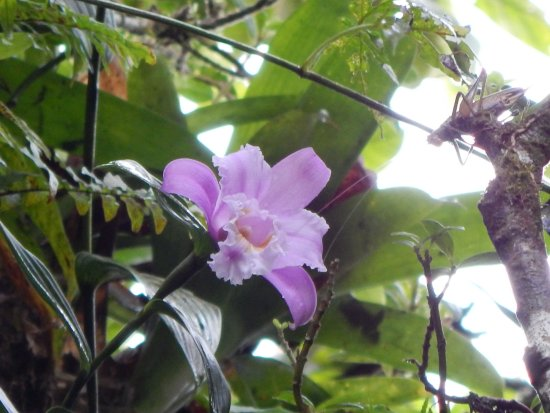 Granada, Nicaragua: Orchid and critter in Mombacho canopy