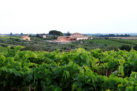 Lanuvio, Italy: L'uva chiama a raccolta - tour aziendale e degustazione