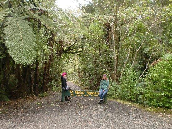 Dargaville, نيوزيلندا: riesiger Farn im Kauri Park