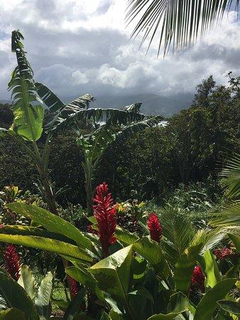 Nuevo Arenal, Costa Rica: photo0.jpg