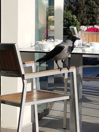 Cactus Hotel: Städpatrullen efter frukosten ;-)