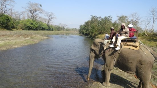 Chitwan Jungle Safari: Riding the elephant whild he gets a drink