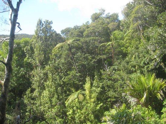 Kaitaia, New Zealand: Herekino Forest Track
