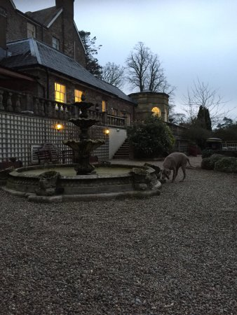 Peterstone Court Hotel: Birthday night away ( with our dog )
