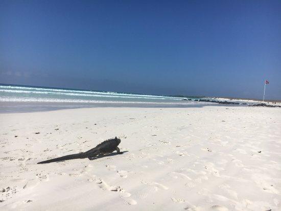 Photo0 Jpg Picture Of Galapagos Beach At Tortuga Bay