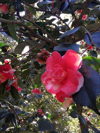 La Canada Flintridge, كاليفورنيا: photo4.jpg