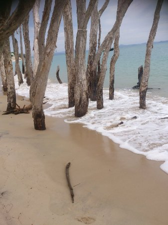 Great Keppel Island, Avustralya: DSC_0019_large.jpg