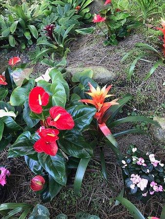 Self Realization Fellowship Hermitage & Meditation Gardens : photo0.jpg