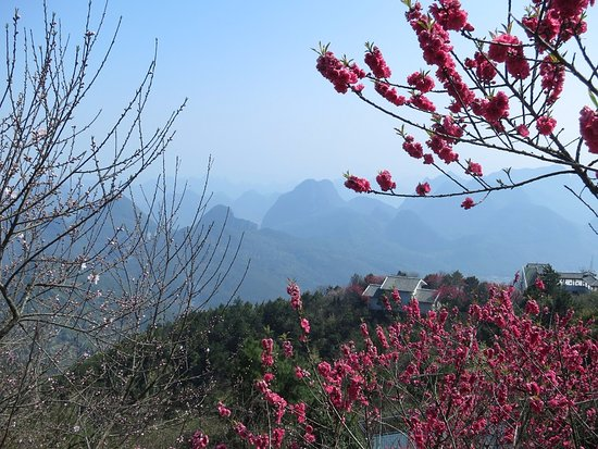 Lushan County, Kina: Nice contrast with early March cherry blossoms