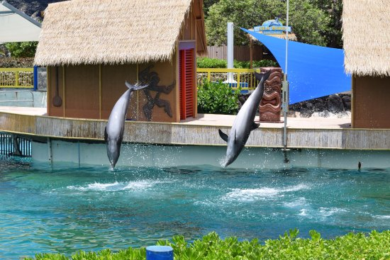 Sea Life Park Hawaii: dolphin show was kind of cute
