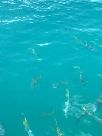 Hayman Island Picture