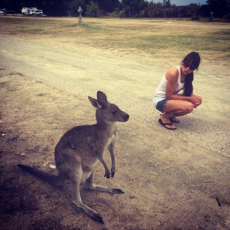 Pambula, Austrália: photo1.jpg