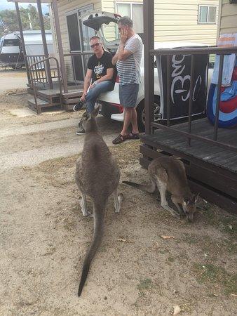 Pambula, Austrália: photo3.jpg