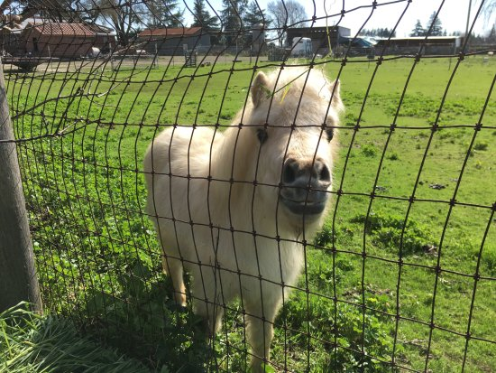Lodi, CA: This is small horse neighbor to the winery.