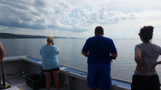 Antigonish, Canadá: Whale watching while we fish for mackerel.