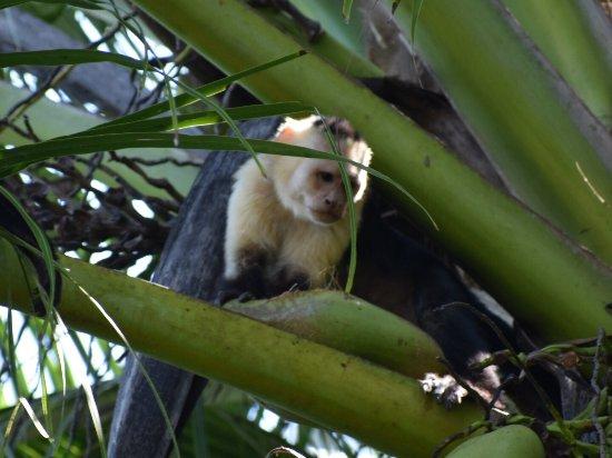 Sierpe, Costa Rica: photo1.jpg