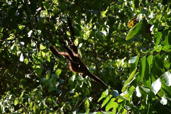 Sierpe, Costa Rica: photo3.jpg