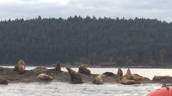 Some seals we met along the way. White Rock Sea Tours
