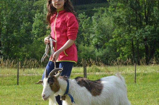 St. Georgen am Reith, Austria: Ziege geht Gassi
