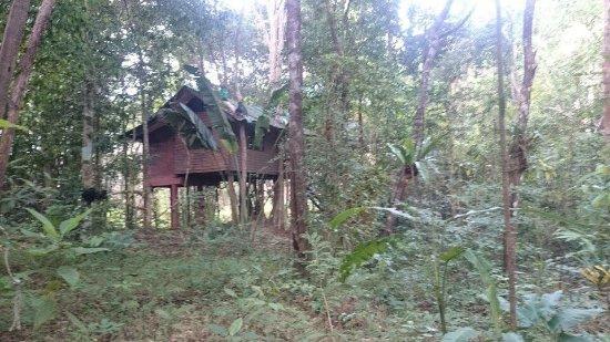 Photo of Khao Sok Tree House Resort Surat Thani
