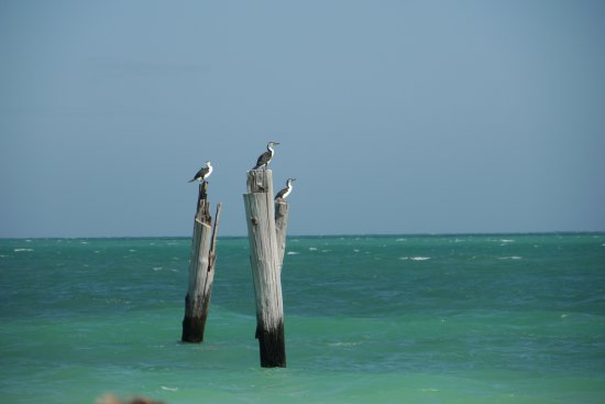 Eucla, Australia: Jetty poles just off the beach