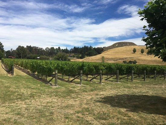 Tripadvisor Napier Wine Tours