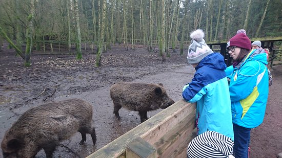 Bad Segeberg, Alemania: Watching the boars being fed
