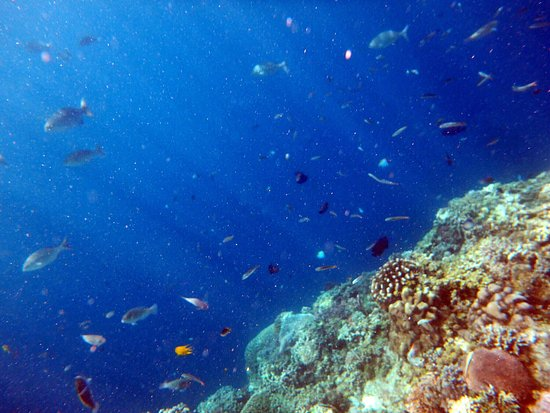 Balicasag Island, Filipina: photo9.jpg