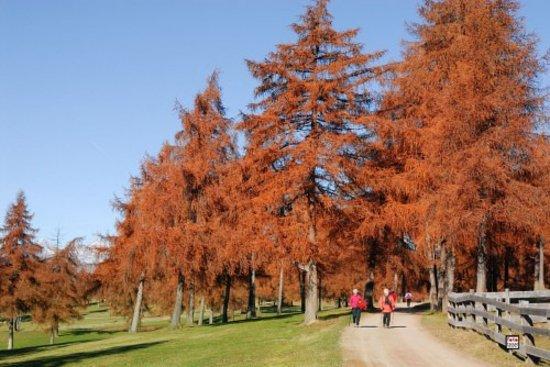 Meltina (Moelten), Italien: Herbst beim Wandern in Mölten