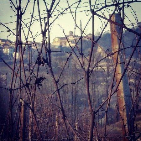 Monta, Italia: Montà visto dalle vigne