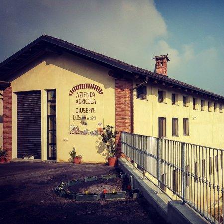 Monta, Italy: Murales dell'azienda Costa Giuseppe