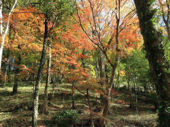 Midori, Japan: photo0.jpg