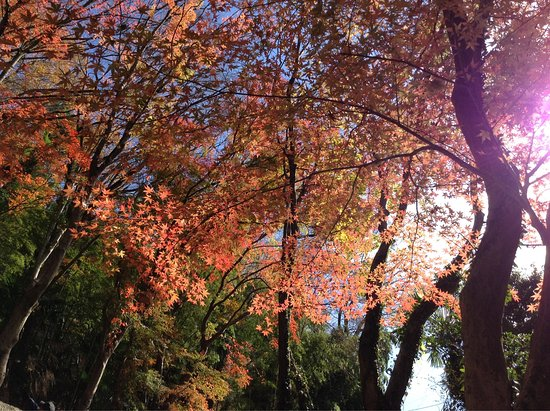 Midori, Japan: photo2.jpg