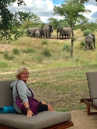 Timbavati Private Nature Reserve, แอฟริกาใต้: photo2.jpg