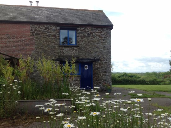 Winkleigh, UK: Otter Cottage and wildflowers, May.
