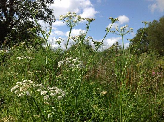 Winkleigh, UK: Summer wildflowers on Popehouse Moor, Wheatland Farm Eco Lodges