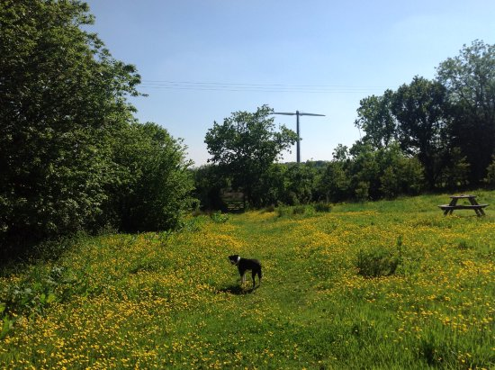 Winkleigh, UK: In May the meadow is a riot of buttercups at Wheatland Farm Eco Lodges