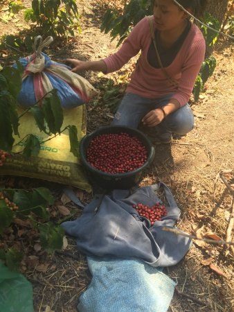 Finca Filadelfia Coffee Resort & Tours: photo7.jpg