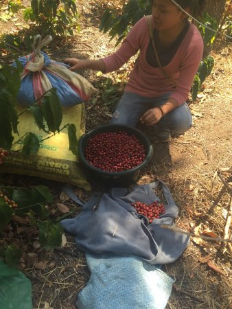 Finca Filadelfia Coffee Resort & Tours: photo8.jpg